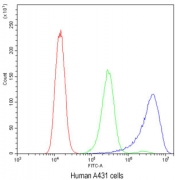 Flow cytometry testing of human A431 cells with Ataxin-2 antibody at 1ug/10^6 cells (blocked with goat sera); Red=cells alone, Green=isotype control, Blue=Ataxin-2 antibody.