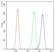 Flow cytometry testing of human PC-3 cells with Annexin V antibody at 1ug/million cells (blocked with goat sera); Red=cells alone, Green=isotype control, Blue= Annexin V antibody.