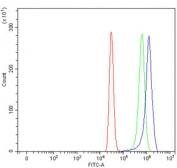 IHC-P: ABCB4 antibody testing of mouse intestine tissue