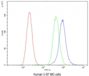 Flow cytometry testing of human U-87 MG cells with CaV1.3 antibody at 1ug/10^6 cells (blocked with goat sera); Red=cells alone, Green=isotype control, Blue= CaV1.3 antibody.