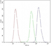 Flow cytometry testing of human SiHa cells with ATXN3 antibody at 1ug/million cells (blocked with goat sera); Red=cells alone, Green=isotype control, Blue= ATXN3 antibody.