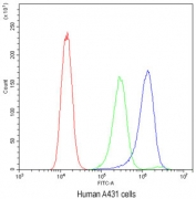 Flow cytometry testing of human A431 cells with ATG14L antibody at 1ug/10^6 cells (blocked with goat sera); Red=cells alone, Green=isotype control, Blue= ATG14L antibody.