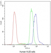 Flow cytometry testing of human HL60 cells with AIRE antibody at 1ug/10^6 cells (blocked with goat sera); Red=cells alone, Green=isotype control, Blue= AIRE antibody.