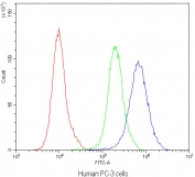 Flow cytometry testing of human PC-3 cells with APRT antibody at 1ug/10^6 cells (blocked with goat sera); Red=cells alone, Green=isotype control, Blue=APRT antibody.