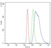 Western blot testing of 1) rat brain, 2) mouse brain, 3) human HeLa, 4) (h) MCF7 and 5) (h) SKOV3 lysate with BAG5 antibody at 0.5ug/ml. Predicted molecular weight: ~51 kDa.