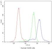 Flow cytometry testing of human HL60 cells with AGO1 antibody at 1ug/10^6 cells (blocked with goat sera); Red=cells alone, Green=isotype control, Blue=AGO1 antibody.