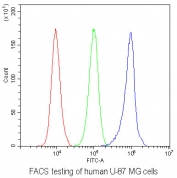 FACS testing of human U-87 MG cells with AHR antibody at 1ug/10^6 cells (blocked with goat sera); Red=cells alone, Green=isotype control, Blue= AHR antibody.