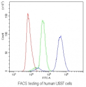 FACS testing of human U937 cells with AHR antibody at 1ug/10^6 cells (blocked with goat sera); Red=cells alone, Green=isotype control, Blue= AHR antibody.