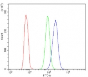 Flow cytometry testing of human HL60 cells with ALDH1A1 antibody at 1ug/million cells (blocked with goat sera); Red=cells alone, Green=isotype control, Blue= ALDH1A1 antibody.