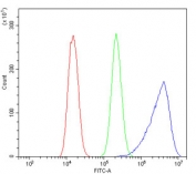Flow cytometry testing of human U-2 OS cells with Aldolase A antibody at 1ug/million cells (blocked with goat sera); Red=cells alone, Green=isotype control, Blue= Aldolase A antibody.