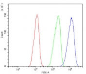 Flow cytometry testing of rat C6 cells with B2M antibody at 1ug/million cells (blocked with goat sera); Red=cells alone, Green=isotype control, Blue= B2M antibody.