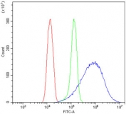 Flow cytometry testing of human HeLa cells with TUBA1A antibody at 1ug/million cells (blocked with goat sera); Red=cells alone, Green=isotype control, Blue= TUBA1A antibody.