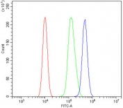 Flow cytometry testing of human 293T cells with ZBTB16 antibody at 1ug/million cells (blocked with goat sera); Red=cells alone, Green=isotype control, Blue= ZBTB16 antibody.
