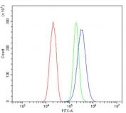 Flow cytometry testing of human SiHa cells with ARG1 antibody at 1ug/million cells (blocked with goat sera); Red=cells alone, Green=isotype control, Blue= ARG1 antibody.