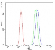 Flow cytometry testing of human A431 cells with ACTR2 antibody at 1ug/million cells (blocked with goat sera); Red=cells alone, Green=isotype control, Blue= ACTR2 antibody.