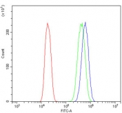 Flow cytometry testing of human A431 cells with ACTR3 antibody at 1ug/million cells (blocked with goat sera); Red=cells alone, Green=isotype control, Blue= ACTR3 antibody.