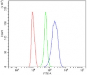 Flow cytometry testing of human RAW264.7 cells with AR antibody at 1ug/million cells (blocked with goat sera); Red=cells alone, Green=isotype control, Blue= AR antibody.