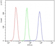 Flow cytometry testing of human U937 cells with ANGPT2 antibody at 1ug/million cells (blocked with goat sera); Red=cells alone, Green=isotype control, Blue= ANGPT2 antibody.Flow cytometry testing of human U937 cells with ANGPT2 antibody at 1ug/million cells (blocked with goat sera); Red=cells alone, Green=isotype control, Blue= ANGPT2 antibody.