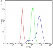 Flow cytometry testing of human PC-3 cells with NDRG1 antibody at 1ug/million cells (blocked with goat sera); Red=cells alone, Green=isotype control, Blue= NDRG1 antibody.