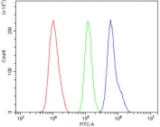 Flow cytometry testing of human U-87 MG cells with SLBP antibody at 1ug/million cells (blocked with goat sera); Red=cells alone, Green=isotype control, Blue= SLBP antibody.