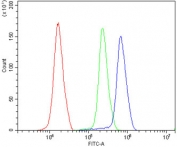 Flow cytometry testing of human K562 cells with ATF1 antibody at 1ug/million cells (blocked with goat sera); Red=cells alone, Green=isotype control, Blue= ATF1 antibody.