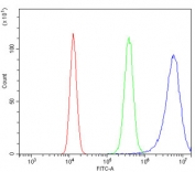 Flow cytometry testing of human 293T cells with GNG4 antibody at 1ug/million cells (blocked with goat sera); Red=cells alone, Green=isotype control, Blue= GNG4 antibody.