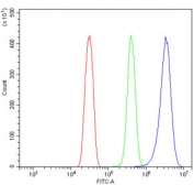 Flow cytometry testing of rat RH35 cells with GNG11 antibody at 1ug/million cells (blocked with goat sera); Red=cells alone, Green=isotype control, Blue= GNG11 antibody.