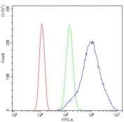 Flow cytometry testing of human SiHa cells with ALDOA antibody at 1ug/million cells (blocked with goat sera); Red=cells alone, Green=isotype control, Blue= ALDOA antibody.