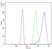 Flow cytometry testing of human SiHa cells with ASS1 antibody at 1ug/million cells (blocked with goat sera); Red=cells alone, Green=isotype control, Blue= ASS1 antibody.