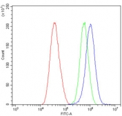 Flow cytometry testing of human A549 cells with AFAP1 antibody at 1ug/million cells (blocked with goat sera); Red=cells alone, Green=isotype control, Blue= AFAP1 antibody.