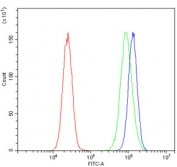 Flow cytometry testing of human 293T cells with AFF4 antibody at 1ug/million cells (blocked with goat sera); Red=cells alone, Green=isotype control, Blue= AFF4 antibody.