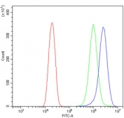 Flow cytometry testing of human U-2 OS cells with ABCB1 antibody at 1ug/million cells (blocked with goat sera); Red=cells alone, Green=isotype control, Blue= ABCB1 antibody.
