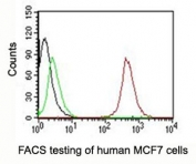FACS testing of MCF-7 cells with PE conjugated CD63 antibody:  Black=cells alone; Green=isotype control; Red=CD63 antibody