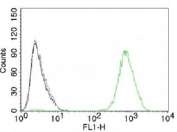 FACS testing of A431 cells with isotype control (gray), without primary antibody (black) and EGFR antibody (green, clone GFR450).