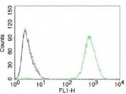 EGFR antibody GFR450 immunohistochemistry