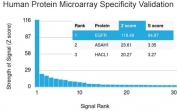 Analysis of HuProt(TM) microarray containing more than 19,000 full-length human proteins using EGFR antibody (clone H9B4). These results demonstrate the foremost specificity of the H9B4 mAb. Z- and S- score: The Z-score represents the strength of a signal that an antibody (in combination with a fluorescently-tagged anti-IgG secondary Ab) produces when binding to a particular protein on the HuProt(TM) array. Z-scores are described in units of standard deviations (SD's) above the mean value of all signals generated on that array. If the targets on the HuProt(TM) are arranged in descending order of the Z-score, the S-score is the difference (also in units of SD's) between the Z-scores. The S-score therefore represents the relative target specificity of an Ab to its intended target.