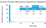 Analysis of HuProt(TM) microarray containing more than 19,000 full-length human proteins using HER2 antibody (clone HRB2/451). These results demonstrate the foremost specificity of the HRB2/451 mAb. Z- and S- score: The Z-score represents the strength of a signal that an antibody (in combination with a fluorescently-tagged anti-IgG secondary Ab) produces when binding to a particular protein on the HuProt(TM) array. Z-scores are described in units of standard deviations (SD's) above the mean value of all signals generated on that array. If the targets on the HuProt(TM) are arranged in descending order of the Z-score, the S-score is the difference (also in units of SD's) between the Z-scores. The S-score therefore represents the relative target specificity of an Ab to its intended target.