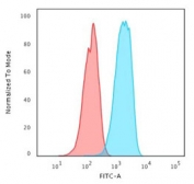 Flow cytometry testing of human MCF-7 cells with HER2 antibody at 1ug/million cells; Red=isotype control, Blue= HER2 antibody.