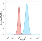 Flow cytometry testing of PFA-fixed human MCF7 cells with HER2 ErbB2 antibody (clone HRB2/282); Red=isotype control, Blue= HER2 ErbB2 antibody.