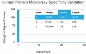 Analysis of HuProt(TM) microarray containing more than 19,000 full-length human proteins using HER2 ErbB2 antibody (clone HRB2/718). These results demonstrate the foremost specificity of the HRB2/718 mAb.Z- and S- score: The Z-score represents the strength of a signal that an antibody (in combination with a fluorescently-tagged anti-IgG secondary Ab) produces when binding to a particular protein on the HuProt(TM) array. Z-scores are described in units of standard deviations (SD's) above the mean value of all signals generated on that array. If the targets on the HuProt(TM) are arranged in descending order of the Z-score, the S-score is the difference (also in units of SD's) between the Z-scores. The S-score therefore represents the relative target specificity of an Ab to its intended target.