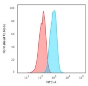 Flow cytometry testing of human MCF7 cells with HER2 ErbB2 antibody (clone HRB2/718); Red=isotype control, Blue= HER2 ErbB2 antibody.
