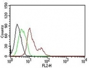 FACS testing of human MCF-7:  Black=cells alone; Green=isotype control; Red= PE conjugated Estrogen Receptor antibody