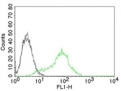 Ku70 + Ku80 antibody flow cytometry K562 cells