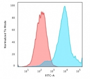 Flow cytometry testing of PFA-fixed human MCF7 cells with HSP27 antibody (clone G3.1); Red=isotype control, Blue= HSP27 antibody.