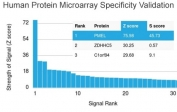 Analysis of HuProt(TM) microarray containing more than 19,000 full-length human proteins using Melamona antibody (clone NKI-beteb). These results demonstrate the foremost specificity of the NKI-beteb mAb. Z- and S- score: The Z-score represents the strength of a signal that an antibody (in combination with a fluorescently-tagged anti-IgG secondary Ab) produces when binding to a particular protein on the HuProt(TM) array. Z-scores are described in units of standard deviations (SD's) above the mean value of all signals generated on that array. If the targets on the HuProt(TM) are arranged in descending order of the Z-score, the S-score is the difference (also in units of SD's) between the Z-scores. The S-score therefore represents the relative target specificity of an Ab to its intended target.
