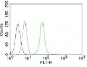 Flow cytometry testing of Jurkat cells and Alexa Fluor 488 conjugated Vimentin antibody (green), cells alone (black) and isotype control (gray).
