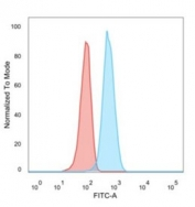 Flow cytometry testing of human MCF7 cells with CCR5 antibody (clone 12D1); Red=isotype control, Blue= CCR5 antibody.