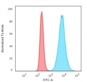 Flow cytometry testing of permeabilized human HeLa cells with anti-Histone H1 antibody (clone SPM256); Red=isotype control, Blue= anti-Histone H1 antibody.