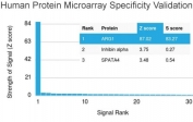 Analysis of HuProt(TM) microarray containing more than 19,000 full-length human proteins using Arginase 1 antibody (clone ARG1/1125). These results demonstrate the foremost specificity of the ARG1/1125 mAb. Z- and S- score: The Z-score represents the strength of a signal that an antibody (in combination with a fluorescently-tagged anti-IgG secondary Ab) produces when binding to a particular protein on the HuProt(TM) array. Z-scores are described in units of standard deviations (SD's) above the mean value of all signals generated on that array. If the targets on the HuProt(TM) are arranged in descending order of the Z-score, the S-score is the difference (also in units of SD's) between the Z-scores. The S-score therefore represents the relative target specificity of an Ab to its intended target.