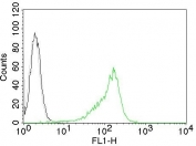 Flow cytometry testing of human 293T cells with Nucleolin antibody (clone NCL/902); Red=isotype control, Blue= Nucleolin antibody.